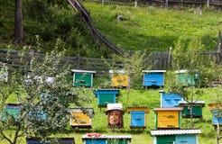 Abeille-jardin Photos libres de droits