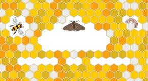 Abeille, mite de cire, waxworm, peigne d'abeille illustration libre de droits