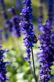 Abeille recherchant le miel images libres de droits