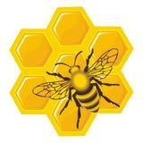 Abeille sur des cellules de miel Photos libres de droits