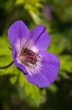 Abeille sur la fleur sur un fond vert Images libres de droits