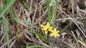 Abeille sur les feuilles vertes de fond jaune de fleurs banque de vidéos