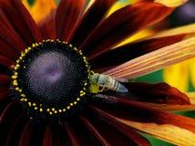 Abeille sur une fleur images libres de droits
