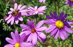 Abeille sur une fleur   Photos stock