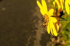 Abeille sur une fleur Image stock