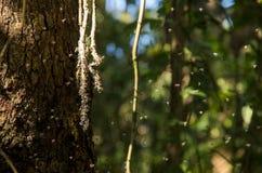 Abeilles à l'arbre Images stock