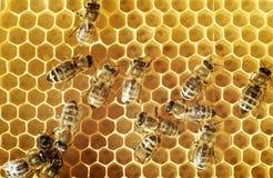 abeilles à miel de peigne Photographie stock libre de droits