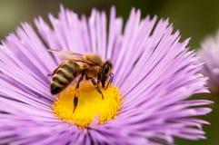 abeilles Photographie stock libre de droits