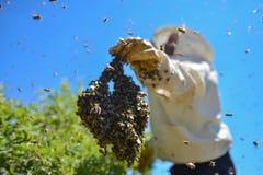 Abeilles agressives et la colonie d'abeille image stock