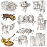 Abeilles, apiculture et miel - illustrations tirées par la main illustration de vecteur