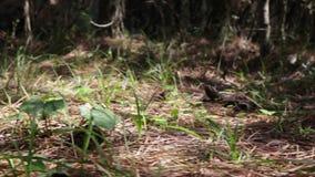 Abeilles dans la forêt clips vidéos