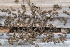Abeilles dans la ruche Photographie stock