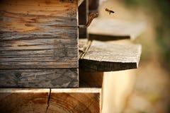 Abeilles dans la ruche photographie stock libre de droits