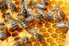 Abeilles dans le rucher pour le plan rapproché de peigne image libre de droits