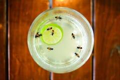Abeilles dans le thé de citron de miel Photographie stock