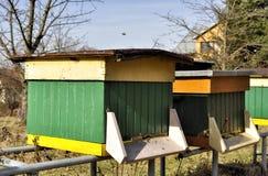 Abeilles dans les ruches Photographie stock