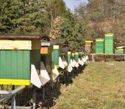 Abeilles dans les ruches Image stock