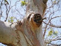 Abeilles dans un arbre Photo stock