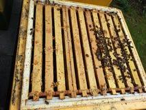 Abeilles dans une ruche Photographie stock libre de droits