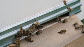 Abeilles de grouillement Formation de nouvelles abeilles d'une famille de colonie Abeilles qui peuvent voler ? une certaine mouch banque de vidéos