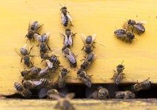 Abeilles de miel dans la ruche jaune Photo libre de droits