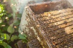 Abeilles de miel devant l'enterence de ruche Photographie stock libre de droits