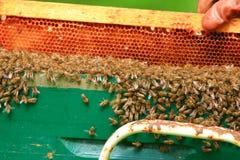 Abeilles de miel grouillant sur le nid d'abeilles photo libre de droits