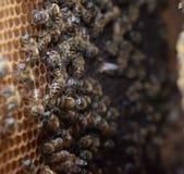 Abeilles de miel sur le rucher à la maison Images libres de droits