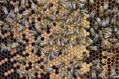 Abeilles de miel sur le rucher à la maison Photos stock