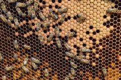Abeilles de miel sur le rucher à la maison Image libre de droits