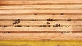 Abeilles de plan rapproché sur des cadres de miel clips vidéos