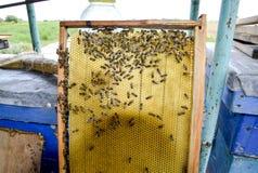 Abeilles de Roy sur des peignes de cire Nid d'abeilles d'abeille, planche avec le nid d'abeilles de la ruche l'instruction-macro  Photo stock
