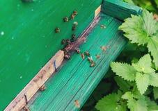 Abeilles de travail autour d'une ruche photo stock