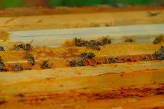Abeilles de travail dans la ruche Image stock