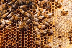Abeilles de travail sur le nid d'abeilles jaune avec du miel doux Images stock