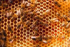 Abeilles de travail sur le nid d'abeilles jaune avec du miel doux Photo stock