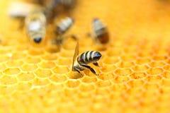 Abeilles en nid d'abeilles image libre de droits