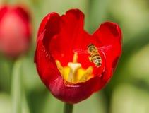 Abeilles et fleurs Photographie stock