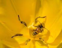 Abeilles et fleurs Photographie stock libre de droits