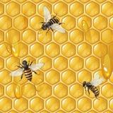 Abeilles et nid d'abeilles Image stock