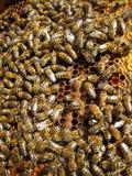 Abeilles et nid d'abeilles Images libres de droits