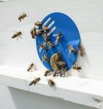 Abeilles et ruche Image libre de droits