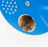 Abeilles et ruche Photos stock