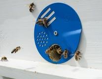 Abeilles et ruche Photographie stock libre de droits