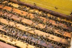 Abeilles fonctionnantes sur des honeycells Image libre de droits