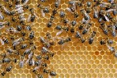 Abeilles fonctionnantes sur des honeycells Photographie stock libre de droits