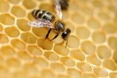 Abeilles fonctionnantes sur des honeycells Images libres de droits