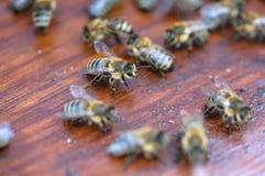 Abeilles mobiles sur le panneau en bois de la fin de macro de ruche  photographie stock libre de droits