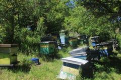 Abeilles organiques de ruches de miel photos libres de droits