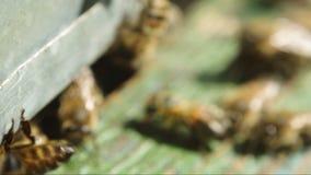 Abeilles près d'un plan rapproché de ruche clips vidéos